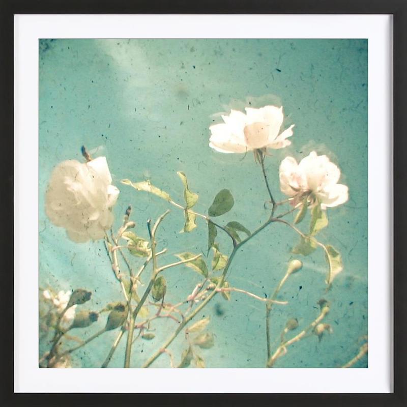 white rose als poster im holzrahmen von cassia beck juniqe. Black Bedroom Furniture Sets. Home Design Ideas