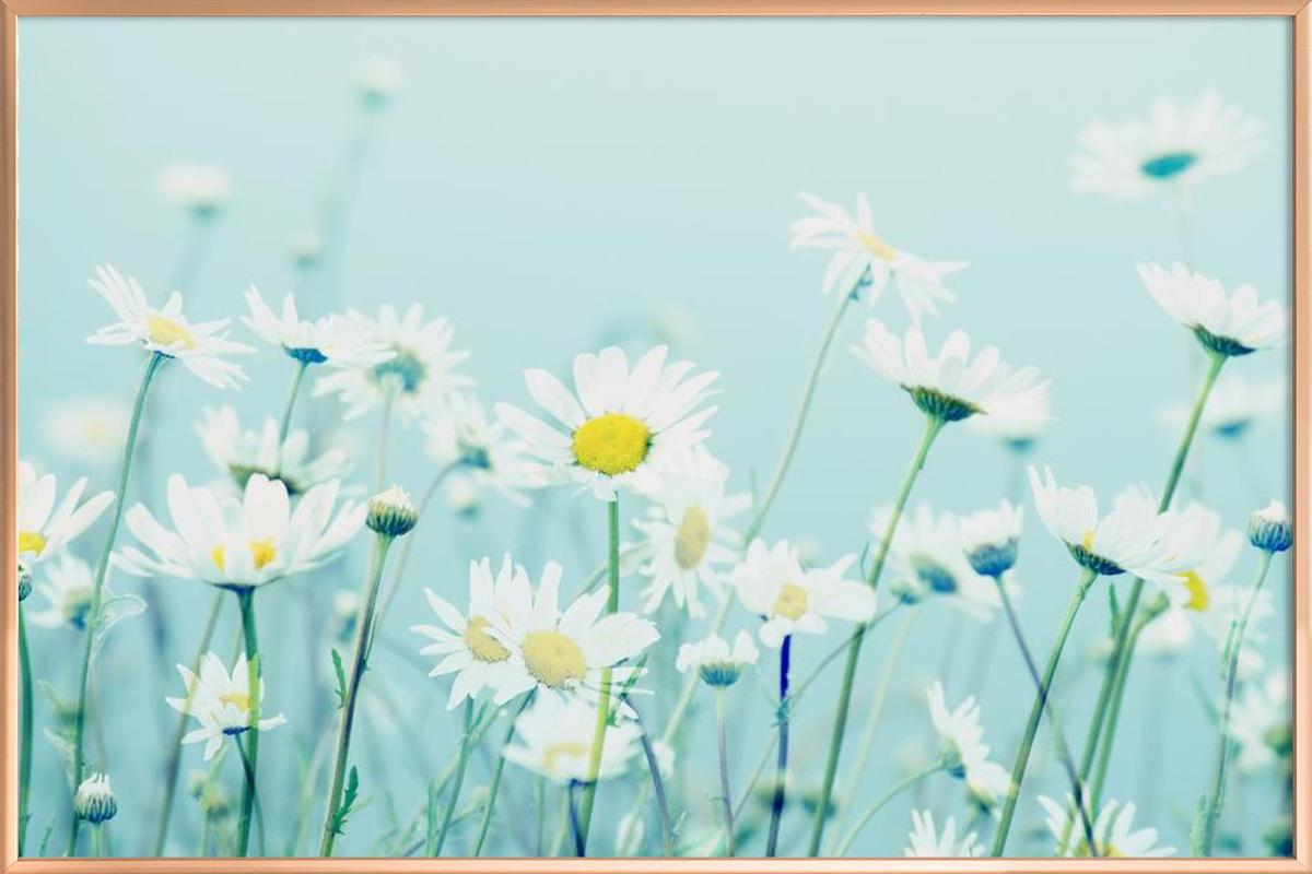 Dancing daisies as poster in aluminium frame by robin delean juniqe izmirmasajfo