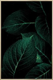 Dark Leaves 1