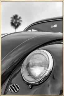 California Beetle