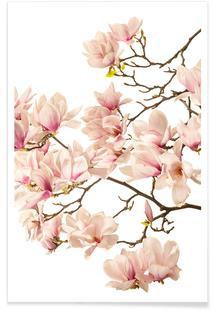 Flora - Magnolie 2