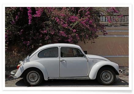 Mexican Beetle 24by Stefanie SandlPosterfrom EUR 699