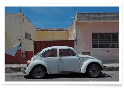 Mexican Beetle 26