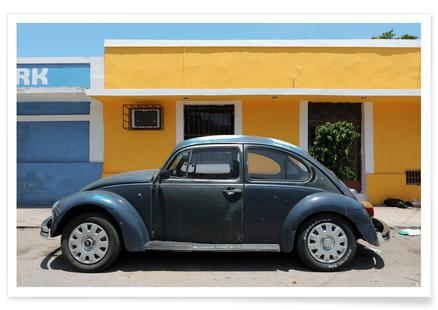 Mexican Beetle 9