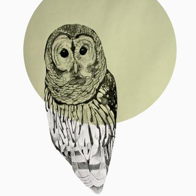 Owl -Alubild