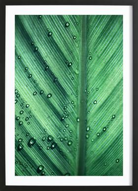 Palm Leaves 11 Framed Print