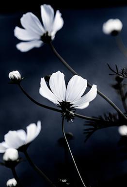 Wild Flowers 1 Aluminium Print