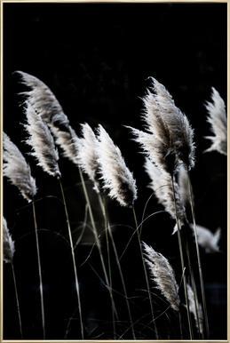 Grass 4 Poster im Alurahmen