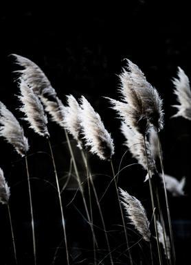 Grass 4 -Leinwandbild