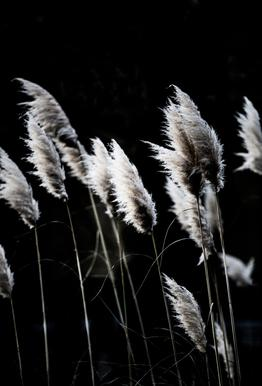 Grass 4 Alu-Dibond Druck