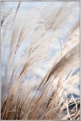 Grass 5 -Poster im Alurahmen