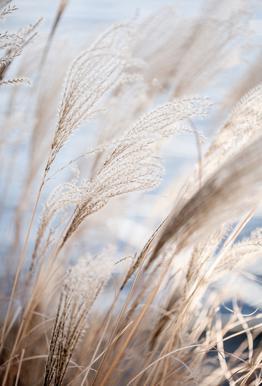 Grass 5 Acrylglasbild