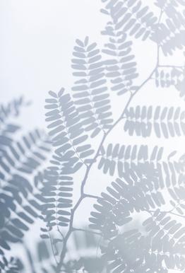 Sun-Kissed Aluminium Print