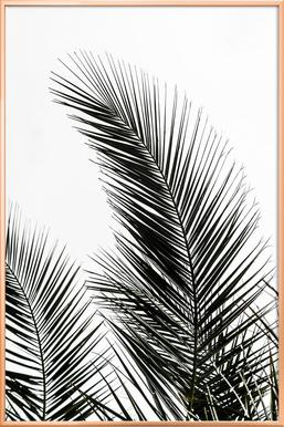 Palm Leaves 1 -Poster im Alurahmen