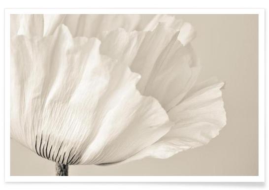 White Poppy Affiche