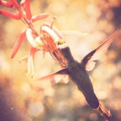 Angels flight canvas doek