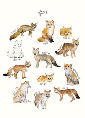 Foxes toile