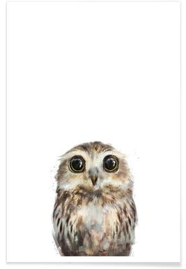 Little Owl Illustration Poster