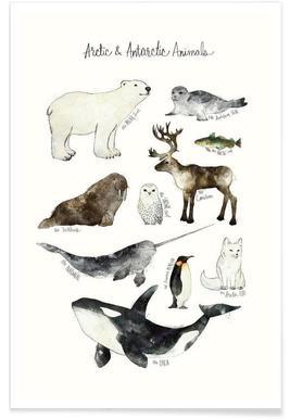 Polartiere-Illustration -Poster