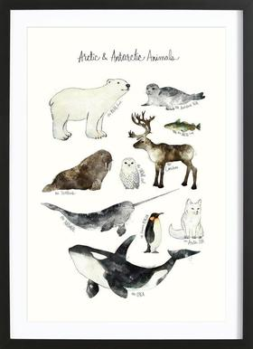 Arctic and Antarctic Animals affiche sous cadre en bois