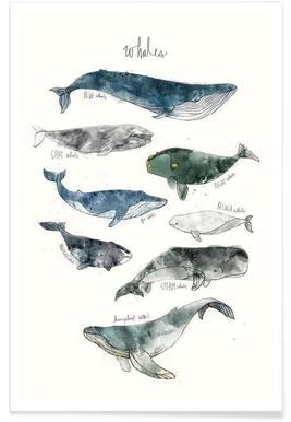 Walvissen illustratie poster