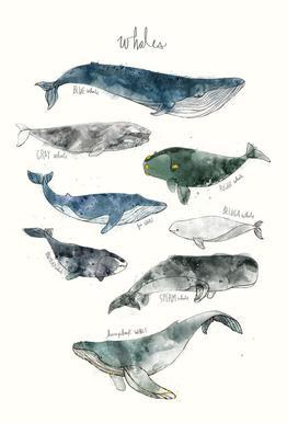 Whales -Alubild
