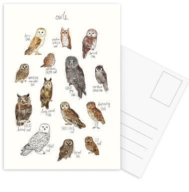 Owls Set de cartes postales