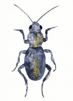 Hello Beetle Canvas Print
