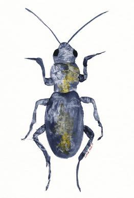 Hello Beetle Impression sur alu-Dibond