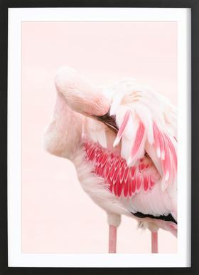 Flamingo Pink Framed Print