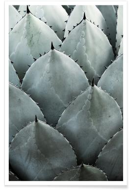 Agave -Poster
