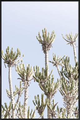 Tankwa Euphorbia 2 Framed Poster