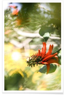Coral Tree Poster