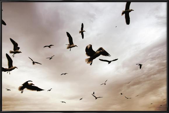 Flight & Freedom ingelijste poster