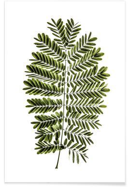Leaf Study 2 poster