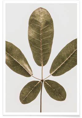 Autum Leaf Poster
