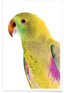 Birds of Paradise 09b Poster