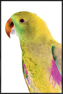 Birds of Paradise 09b Framed Poster