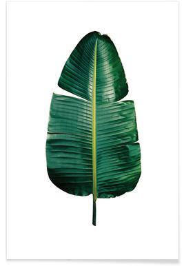 Classic Botanical Leaves 09 Affiche