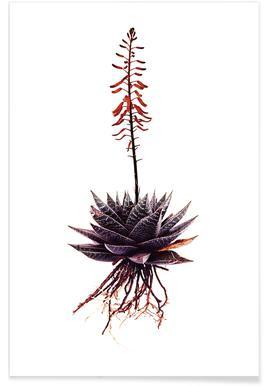 Classic Botanical Whole Plant 13 -Poster
