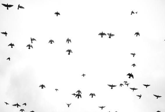 Flight & Freedom 03 Acrylic Print