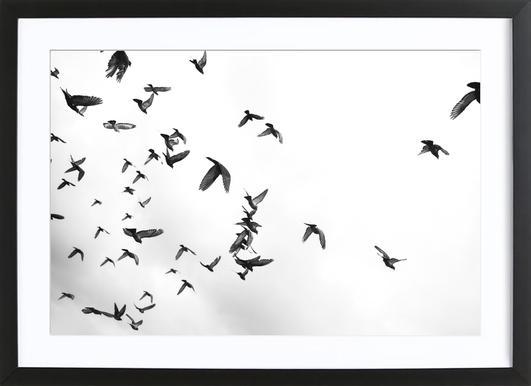 Flight & Freedom 05 Framed Print