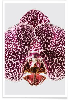 Leopard Orchid poster