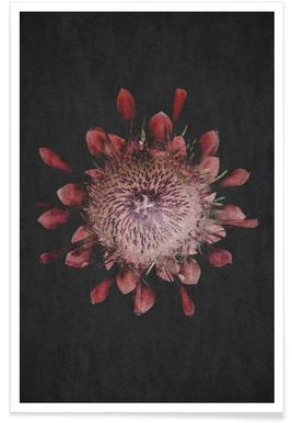 Fynbos Protea poster
