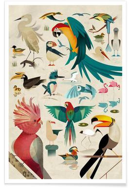 Oiseaux vintage affiche
