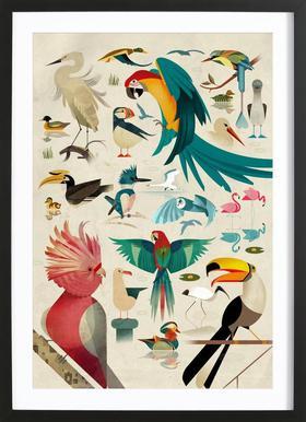 Birds affiche encadrée