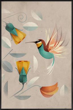 Kolibri Affiche sous cadre standard