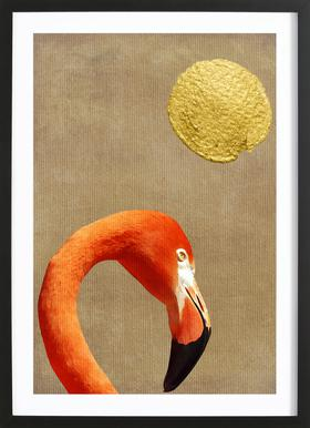 Flamingo Awakening Framed Print