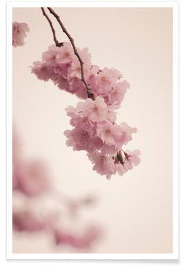 Forever Spring affiche