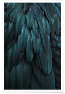 Dark Feathers Poster